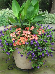 28 Top and Wonderful Flowers for Outdoor Pots Ideas – Page 7 of 28 - Garden Pot Design Outdoor Pots, Outdoor Flowers, Outdoor Gardens, Outdoor Ideas, Container Gardening, Gardening Tips, Organic Gardening, Vegetable Gardening, Gardening Gloves