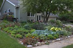 Beautiful front yard flower and vegetable garden.