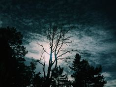 Old pine winter sky. Photo by Amanda Bransgrove