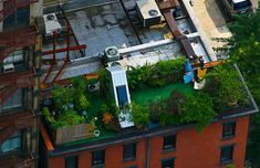 Graphic, Entertainment, News, Phenomenon, Tutorial: Green Roof, Green Parks in Roof Building