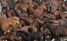 Edição 107 - Cavalos Selvagens -Cavalos nos currais