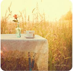 Wheat Field and the coffee cup and the pink rose..