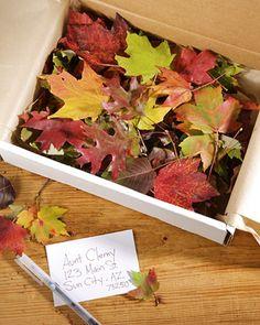 Glittered Leaves in a Box | Martha Stewart