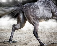Love a dark dappled gray! Great photo!