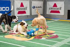 """""""Puppy Bowl,"""" an annual two-hour TV special that mimics a football game with canine players, made its debut eight years ago on Animal Planet."""
