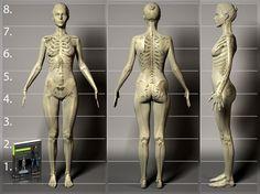 Anatomy Chart.