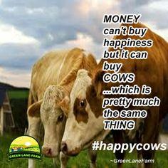 Farm jokes #happycow #greenlanefarm -yep, coming from a cow whisperer