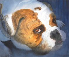 Wonderful bulldog face waiting for his owner, as usual ...