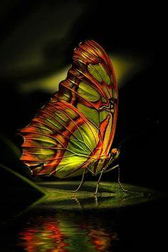 green and orange vlinder