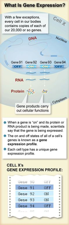 How do genetics work? Here's an explanation for how you measure gene expression. Biology Classroom, Biology Teacher, Ap Biology, Science Biology, Teaching Biology, Life Science, Science Resources, Science Education, Molecular Genetics