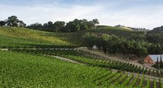 Justin Winery, Paso Robles. Pinned by www.CaliforniasHarvest.com