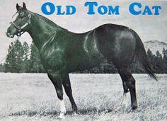 Old Tom Cat