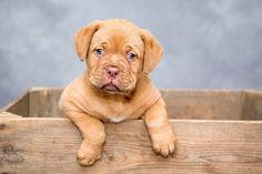 Výcvik psa, výchova štěněte | Zajímavosti Free Puppies, Dogs And Puppies, Puppies Puppies, Best Puppies, Retriever Puppies, Adorable Puppies, Labrador Retriever, Pet Dogs, Dog Cat