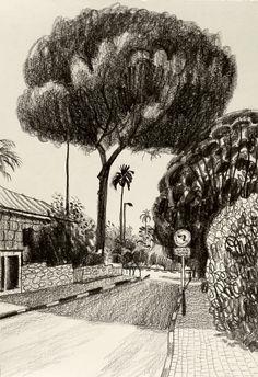 Maria Zaikina   Pine tree in Zikhron Ya'acov   29.7x21 cm, pencil on paper, 2016