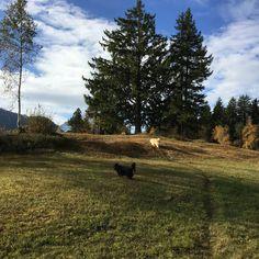 Country Roads, Mountains, Dogs, Nature, Travel, Doggies, Naturaleza, Viajes, Destinations
