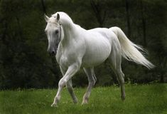 There will always be a special place in my heart for a flashy Arab!!