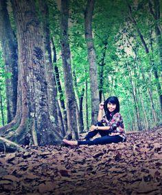 Bedul Mangrove Woods