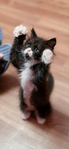 Here are 20 adorable kittens to help you master the day - Katzen Bilder - Gatos Ragdoll Kittens, Cute Cats And Kittens, I Love Cats, Crazy Cats, Adorable Kittens, Kittens Meowing, Tabby Cats, Bengal Cats, Kittens Playing