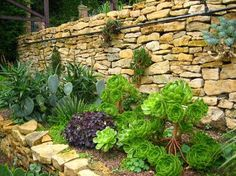 Succulents in a raised bed & on a brick wall.