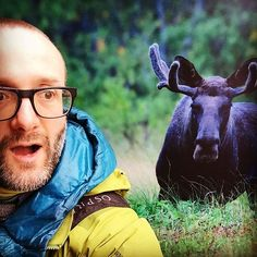 Beware of the moose #besafie #don'tgotoclose #LonelyPlanet