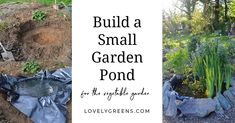 How to build a small garden pond that will attract frogs & beneficial wildlife. Includes information on placement, size, materials, and maintenance Ponds For Small Gardens, Small Ponds, Japanese Maple Bonsai, Bonsai Tree Types, Garden Pond, During The Summer, Green Colors, Gardening Tips, Outdoor Living
