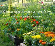 lifeme: I 7 FIORI DA SEMINARE NELL'ORTO CONTRO I PARASSITI #fiori #giardino #garden #balcone #orto #primavera
