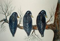 CROW  ROW...WATERCOLOR..INKS