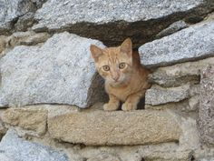 Cats in Crete - a look beyond and behind these iconic images of Greece Cute Kittens, Cats And Kittens, Map Wall Decor, Animal Wallpaper, Hd Wallpaper, Red Cat, Beautiful Cats, Pretty Cats, Original Wallpaper