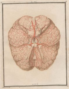 Anatomical illustrations on the study of the brain - Visualoop Brain Art, Brain Science, Illustration Plate, Botanical Illustration, The Lovely Bones, Whiskers On Kittens, Vintage Medical, Botanical Drawings, Free Graphics