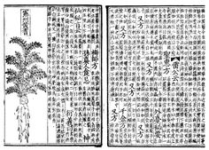 Pen ts'ao pages, a.d 1249 Chinese herbal medicine use of margins and rules creates order