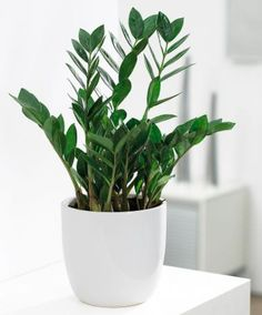 12 Best Plants That Can Grow Indoors Without Sunlight | Sunlight ...