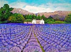 lavender fields - Google Search