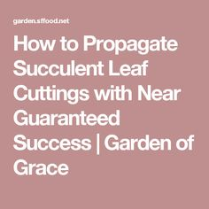 How to Propagate Succulent Leaf Cuttings with Near Guaranteed Success | Garden of Grace