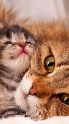 34 funny animal photos to brighten your day – # your … – Funny Animals Cute Cats And Kittens, I Love Cats, Crazy Cats, Kittens Cutest, Ragdoll Kittens, Tabby Cats, Bengal Cats, Pretty Cats, Beautiful Cats