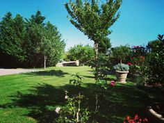 Tuscany, Stepping Stones, Golf Courses, Villa, Outdoor Decor, Plants, Stair Risers, Tuscany Italy, Plant
