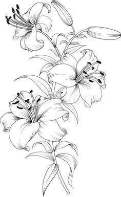 Ilona Trelej (notitle) Ilona Trelej The post Ilona Trelej appeared first on Blumen ideen. Pencil Art Drawings, Tattoo Drawings, Drawing Sketches, Sketch Tattoo, Pencil Drawings Of Flowers, Drawing Tips, Drawing Ideas, Sketching, Lilies Drawing
