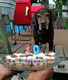 Happy 10th Birthday Hardy-Cake Smash Session-Eightymillion Photography
