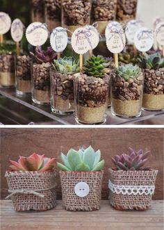 Suculentas, souvenirs con vida propia souvenirs-of-birthday-with-succulents Mehr Wedding Gifts For Guests, Wedding Favours, Succulent Favors, Deco Floral, Flower Pots, Flowers, Cactus Y Suculentas, Garden Care, Planting Succulents