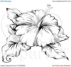 Clipart-Of-A-Black-And-White-Engraved-Hibiscus-Flower-And-Leaves-Royalty-Free-Vector-Illustration-10241346846.jpg (1080×1024)