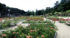 Parque del Oeste. Madrid, rosaleda.