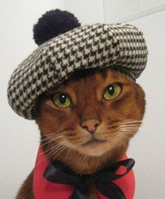 Baxter looks rather debonaire in his houndstooth beret, don't you agree? #greypoupon