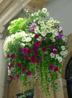 Hanging Flower Basket Inspiration Hanging baskets: could be a once way to screen the new fence by kitchen Container Flowers, Flower Planters, Container Plants, Garden Planters, Container Gardening, Pallet Gardening, Succulent Containers, Fall Planters, Patio Plants