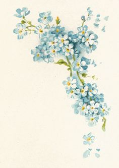 Antique Images: Free Vintage Flower Graphic: Blue Forget-Me-Not Flowers Corner Design. Love this for a tattoo idea Vintage Blume Tattoo, Vintage Flower Tattoo, Vintage Flowers, Tattoo Vintage, Blue Flowers, Vintage Floral Tattoos, Draw Flowers, Trendy Tattoos, New Tattoos