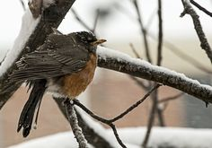 How birds survive winter storms and extreme cold