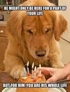 Our fur-babies aren't here forever so let's make their life a great one while we have them!