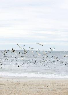 {Seagulls... On the beach.}