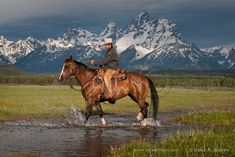 A wrangler and horse crossing a small creek with distant Grand Teton peaks in historic Jackson Hole, WY Cowboy Horse, Cowboy Art, Trail Riding, Horse Riding, Cowboy Photography, Bucking Bulls, Hot Country Boys, Horse And Human, Black Cowboys