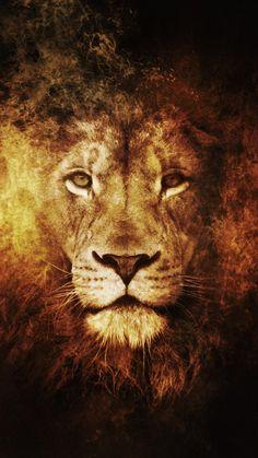 Lion Wallpaper Hd Animals Lion Iphone 6 Plus Wallpaper