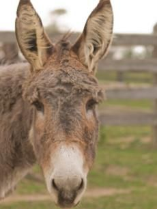 Orly - In Memory | The Donkey Sanctuary