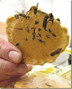 Biscoito de vespas: Como você pode ver na figura acima, o biscoito é feito com vespas de verdade. A criação é de um clube de amantes de vespas (coisas do Japão). Cada biscoito utiliza cerca de cinco vespas, que foram anteriormente fervidas em água. Elas estão com os ferrões, mas os criadores do biscoito afirmam que eles não representam mais nenhum perigo para os humanos.